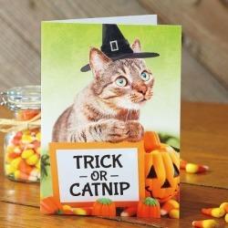 Cat Humor Halloween Cards