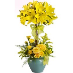 Lily Topiary found on Bargain Bro India from Flora2000 for $149.99