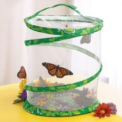 Butterfly Garden found on Bargain Bro India from Lillian Vernon for $26.99