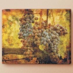 The Vineyard's Harvest Canvas Print