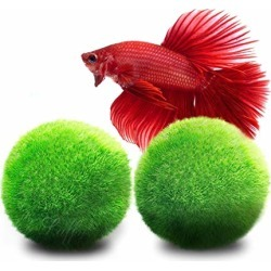 Luffy Betta Balls : Live Round-Shaped Marimo Plant : Natural Toys for Betta Fish : Aquarium Safe found on Bargain Bro from  for $7.95