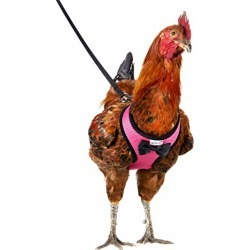 Yesito Chicken Harness Hen Size With 6ft Matching Leash - Adjustable, Resilient, Comfortable, Breathable, Medium, Suitable for Chicken Weighing about 4.4 Pound,Pink found on Bargain Bro from  for $17.99