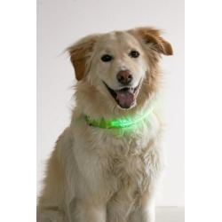 Illumiseen LED Dog Collar - Green M at Urban Outfitters