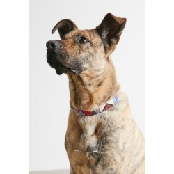 United By Blue Dog Collar - Red at Urban Outfitters