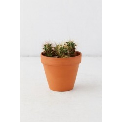Cactus Grow Kit - Pink at Urban Outfitters