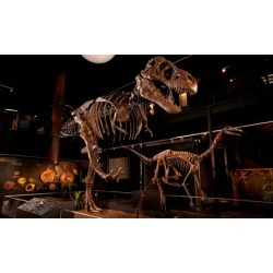 General Admission for 2, 4, or 6 at Houston Museum of Natural Science at Sugar Land (Up to 29% Off)
