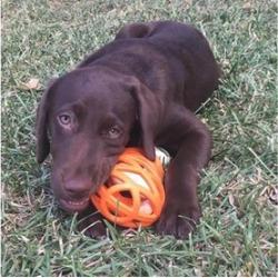JW Hol-ee Gourmet Dog Toys