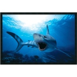 Shark' Framed Art Print with Gel Coated Finish 37x25-in