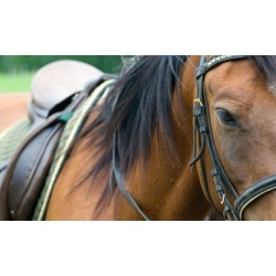 One or Three Private Horseback Riding Lessons at Spring Valley Equestrian Center (Up to 39% Off)