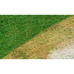 $25 for $50 Lawn Painting Groupon - Brown Lawn Green