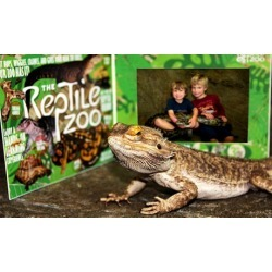 General Admission for Two or Four and Photos with a Snake at The Reptile Zoo (Up to 50% Off)
