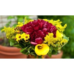 Floral Design Sampler found on Bargain Bro India from groupon for $150.00