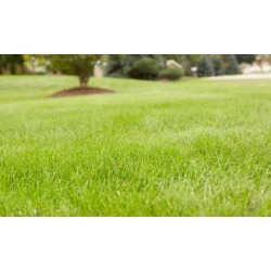 Broadleaf Weed-Control Treatment with Optional Fertilizer Treatment from Weed Man (Up to 60%Off)