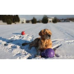 Virtually Indestructible Dog Toys