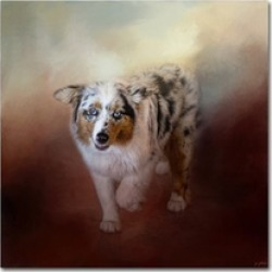 Jai Johnson 'Ball Of Energy Australian Shepherd' Canvas Art