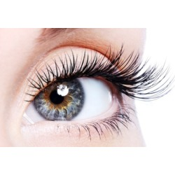 Eyelash Extensions with Optional Two-Week Fill at Hollywood Lash and Beauty Bar (Up to 67% Off)