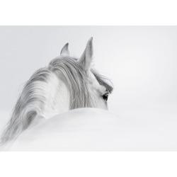 Rider Horse Canvas Print