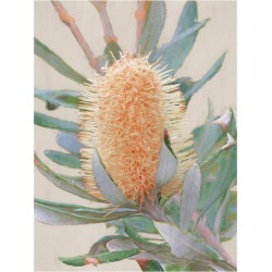 Golden Banksia Canvas Wall Art Frame / Size: Black Framed / 120 x 90cm found on Bargain Bro Philippines from templeandwebster.com.au for $393.58