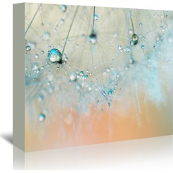 Droplets of Aqua Printed Wall Art Frame / Size: Stretched Canvas / 50 x 75cm found on Bargain Bro Philippines from templeandwebster.com.au for $115.60