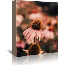 Echinacea Printed Wall Art Frame / Size: Stretched Canvas / 45 x 30cm found on Bargain Bro Philippines from templeandwebster.com.au for $60.88