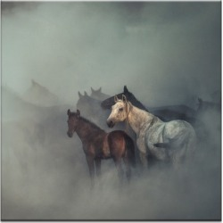 The Lost Horses Photographic Art Print Frame/Size: Unframed Canvas / 102 x 102cm