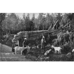 Giclee Painting: Zachrisson's Goat Farming in Dalarna, Sweden, 1908-19