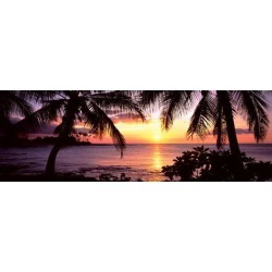 Poster: Poster: Palm Trees on the Coast, Kohala Coast Poster, 24x8in. found on Bargain Bro India from Allposters.com for $23.49
