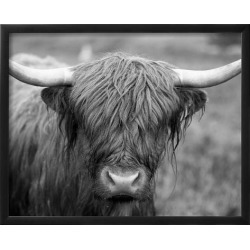 Framed Art: Black and White Cow, 16x20in.
