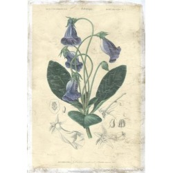 Giclee Painting: D'Orbigny's Art Print: Floral Botanique Art Print by