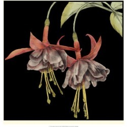 Giclee Painting: Goldberger's Art Print: Graphic Fuchsia Art Print by