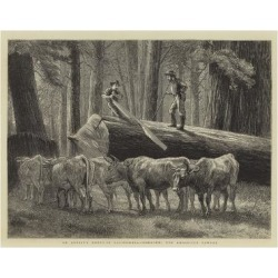 Giclee Painting: An Artist's Notes in California, Logging, the Cross-C