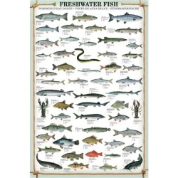 Art Print: Freshwater Fish, 40x30in. found on Bargain Bro India from Allposters.com for $32.49