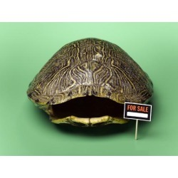 Poster: Hamilton's Empty Turtle Shell with for Sale Sign, 24x18in.