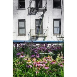 Poster: Oze's Urban Meadow Of Manhattan, New York City, 24x16in.