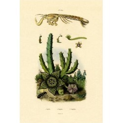 Giclee Painting: Mantis Shrimp, 1833-39, 24x16in. found on Bargain Bro India from Allposters.com for $29.49