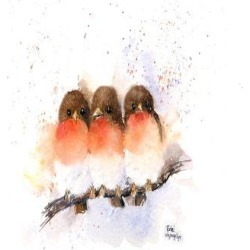 Stretched Canvas Print: McNaughton's Cute Robins, 18x24in. found on Bargain Bro from Allposters.com for USD $12.15