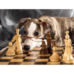 Poster: Lilun's Puppy To Play Chess, 24x18in.