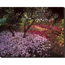Stretched Canvas Print: Rej's Falling Flowers, 22x28in.