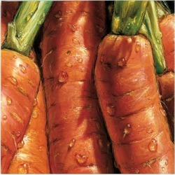 Giclee Painting: Alma'ch's Carrots, 42x42in.