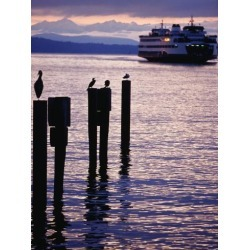 Poster: Worcester's Wa State Ferry Coming in to Dock, Seattle, Washing