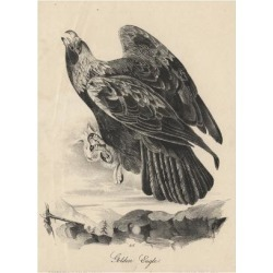 Giclee Painting: Audubon's Golden Eagle, Litho by J.T. Bowen, from 'Bi