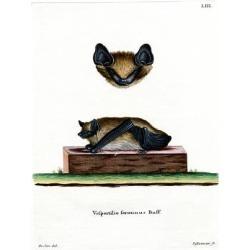 Giclee Painting: Serotine Bat, 24x18in.