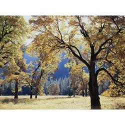 Poster: Frank's California, Yosemite National Park, California Black O