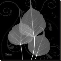 Stretched Canvas Print: Koetsier's Bo Tree Leaf Xray, 25x25in.