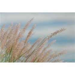 Giclee Painting: Paulson's Fountain Grass, 34x49in.