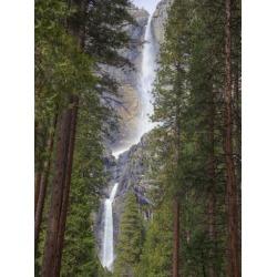 Poster: Wild's Yosemite Falls, Yosemite National Park, California, Usa
