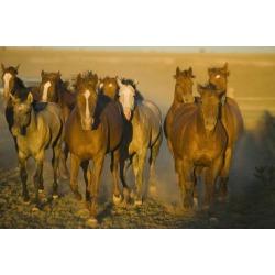 Poster: DLILLC's Running Quarter Horses, 24x16in.