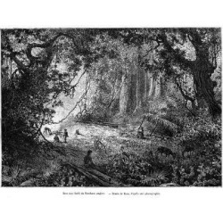 Giclee Painting: Riou's Rainforest in British Honduras, 19th Century,