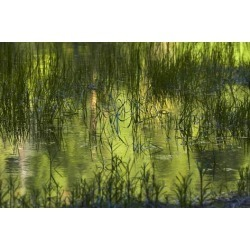 Poster: Wall's Reflections in Mirror Lake, Yosemite National Park, Cal
