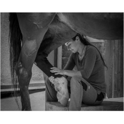 Giclee Painting: Girl Treats Horse, 44x56in.